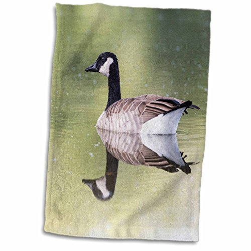 "Price comparison product image 3D Rose USA-Ogle County-Illinois-Canada Goose Floating on Rock River Hand Towel, 15"" x 22"""