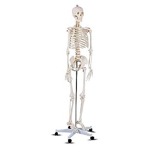 Giantex Life Size Human Anatomical Anatomy Skeleton Medical Model + Stand