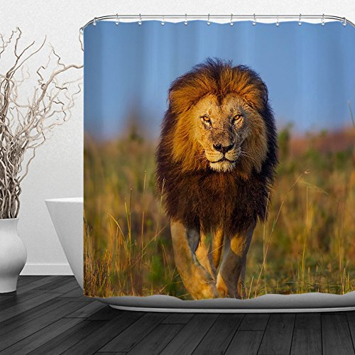 ALFALFA African Lion Shower Curtain, Wild Forest lion King Animal Printed Bathroom Decor with Hooks, Waterproof Fabric,72