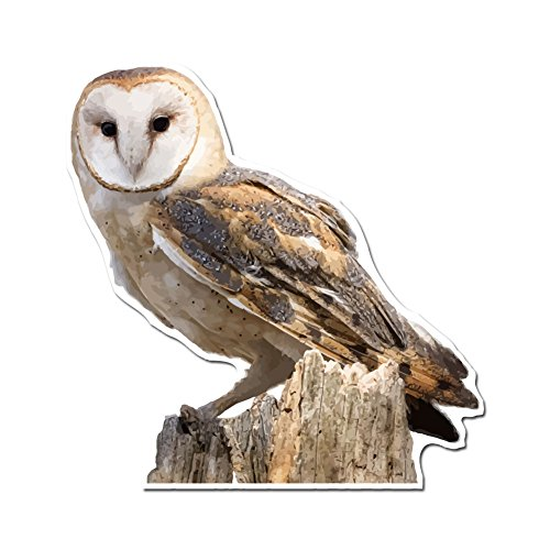 Photo Realistic Barn Owl - 5 Inch Full Color Vinyl Decal for Indoor or Outdoor use, Cars, Laptops, Décor, Windows, and more ()