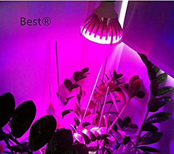 best to buy full spectrum 10w led grow light bulb for veg and flower