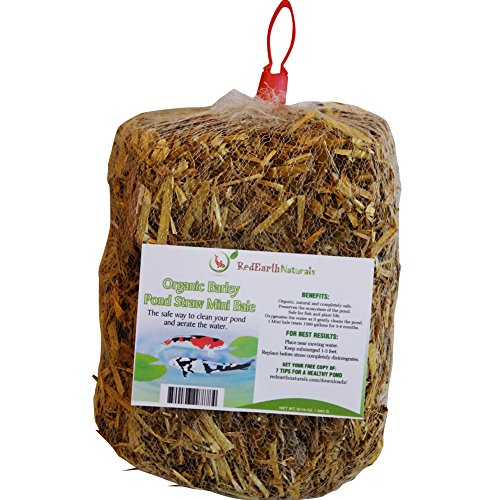 POND CLARIFIER for PROUD KOI POND OWNERS – Premium & Organic – Barley Straw for Ponds Mini Bale – Cleans Koi Ponds & Water Gardens the Safe Natural Way