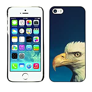 Qstar Arte & diseño plástico duro Fundas Cover Cubre Hard Case Cover para Apple iPhone 5 / iPhone 5S ( Bald Eagle Blue White Patriotic Bird)