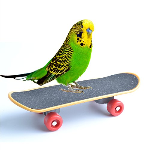 Bird Parrot Toys Training Skateboard Stand Perch for Parakeet Budgies Cockatiels Lovebird Conure Funny Talbe Toy