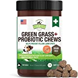 Best Dog Urine Neutralizers - Green Grass Saver for Dogs + Probiotics Review