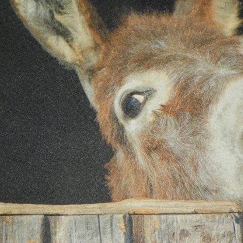 Fu/ßmatte ESEL Donkey K/üchenmatte waschbar