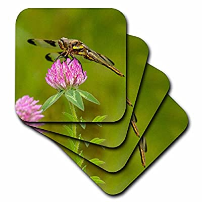 3dRose Danita Delimont - Insects - Female Blue Dasher dragonfly on clover, Kentucky - Coasters