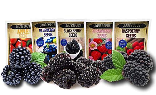 Fruit Combo Pack Raspberry, BlackBerry, Blueberry, Strawberry, Apple 685+ Seeds UPC 695928806997 & 3 Free Packs of BlackBerry - Seeds Blackberry