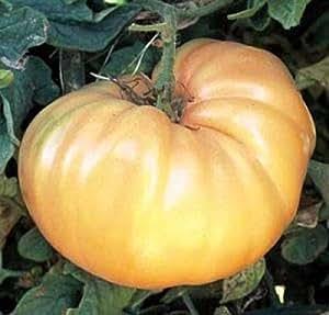 Goldie Heirloom Tomato Seed