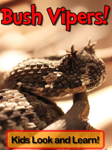 Bush Vipers! Learn About Bush Vipers and Enjoy Colorful Pictures - Look and Learn! (50+ Photos of Bush Vipers) (Bush Viper)