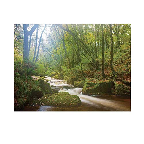 - Woodland Decor Photography Background,Forest Scene at Golitha Falls Nature Reserve on The River Fowey Cornwall England Backdrop for Studio,10x6ft