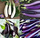 David's Garden Seeds Collection Set Eggplant Open Pollinated 4432 (Multi) 4 Varieties 200 Seeds (Non-GMO, Open Pollinated, Heirloom, Organic)