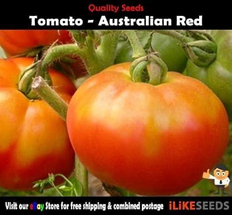 Tomate rojo de Australia 20 semillas mínimo. Planta huerto ...