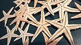 25 Pcs Natural Tan Flat Starfish Star Sea Shell Beach 3