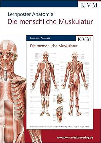 Anatomie Lernposter: Die menschliche Muskulatur: Amazon.de: KVM ...