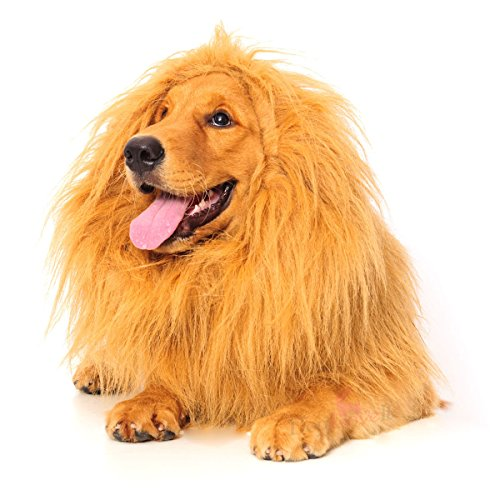 [Lion Mane for Dog, Dogloveit Dog Costume with Gift [Lion Tail] Lion Wig for Dog] (Dog Lion Costume Large)