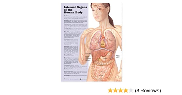 Amazon.com: Internal Organs of the Human Body Anatomical Chart ...