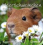 Meerschweinchen 2018 - Tierkalender, Postkartenkalender, Kalender für Kinder  -  16 x 17 cm