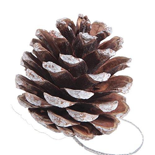 18 Pcs White Pine Cones Buycheapdg Snow Color Fir Pine