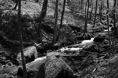 森の中のストリーム壁紙-自然の壁紙-#9356 - 白黒の キャンバス ステッカー 印刷 壁紙ポスター はがせるシール式 写真 特大 絵画 壁飾り75cmx50cm