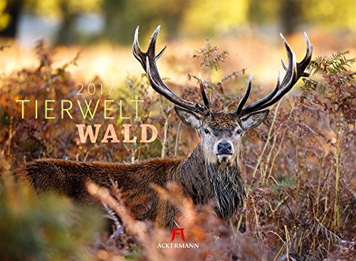 Tierwelt Wald 2017