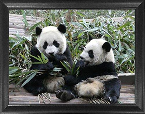 panda pictures - 3