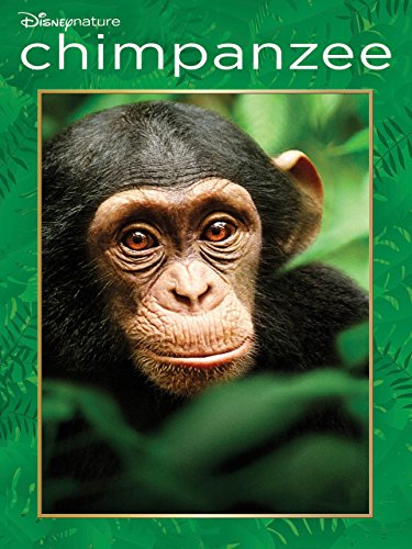 Chimp Chimpanzee - Disneynature Chimpanzee