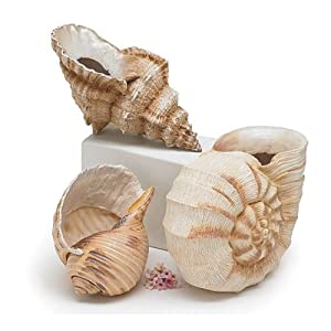 510t%2Bi5ATWL._SS300_ Beach Vases & Coastal Vases