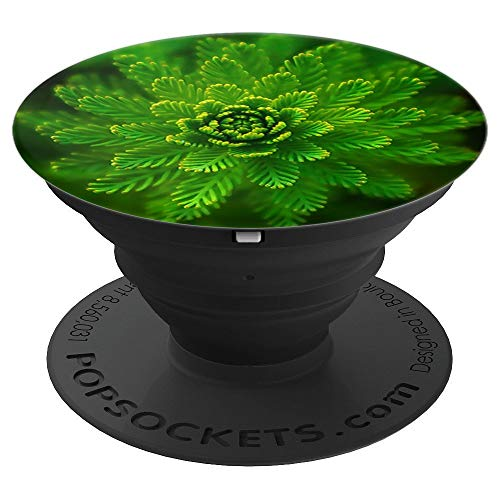 Circular Fern Green Nature Picture - PopSockets Grip and Stand for Phones and Tablets ()