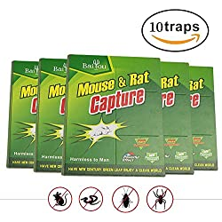 Baiou 10 Pcs Butter Scented Humane Mouse and Insect Glue Boards Rat Trap Mice Pest Snake Sticky Traps Bulk with Professional Strength Glue for Indoor or Outdoor (10)