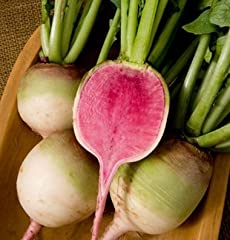 """Commonly referred to as """"Watermelon"""" radish. Large, 2-4"""" (depending on harvest date), round radishes with unique dark pink flesh. Large tops. Remarkably sweet, delicious taste. For summer to fall sowing only; will bolt to seed from spring sow..."""