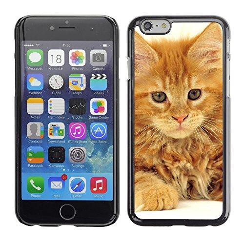 "Premio Sottile Slim Cassa Custodia Case Cover Shell // V00003620 maine coon cat // Apple iPhone 6 6S 6G PLUS 5.5"""
