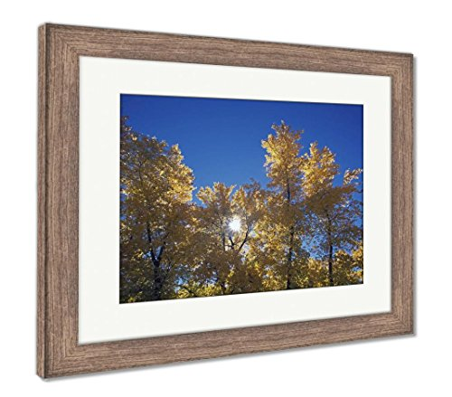Ashley Framed Prints Sun Peeps Through Autumn Cottonwood Trees San Diego California USA, Wall Art Home Decoration, Color, 30x35 (Frame Size), Rustic Barn Wood Frame, ()