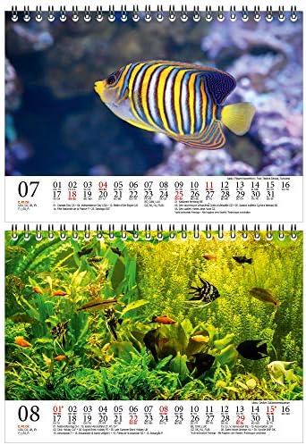 Aquariumszauber DIN A5 Tischkalender für 2021 Tiere im Aquarium und Unterwasser - Geschenkset Inhalt: 1x Kalender, 1x Weihnachts- und 1x Grußkarte (insgesamt 3 Teile)