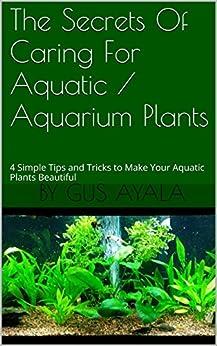 The secrets of caring for aquatic aquarium plants 4 for Minimalist tips and tricks