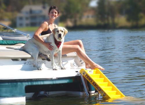 Paws Aboard Doggy Boat Ladder And Ramp Get Affordable