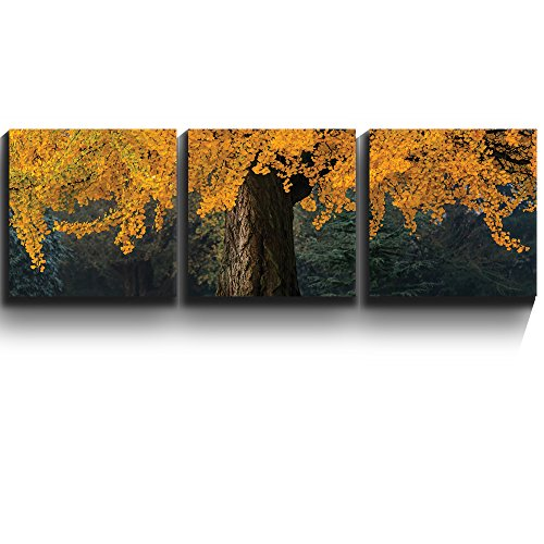 3 Square Panels Contemporary Art Beautiful yellow autumn tree Landscape Three Gallery ped Printed Piece x3 Panels