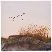 3dRose LLC 8 x 8 x 0.25 Inches Mouse Pad, Birds Flying Over St Augustine Florida Beach Dune (mp_156124_1)