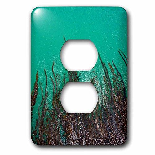 Danita Delimont - Marine Life - Kelp off of pier