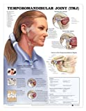 Temporomandibular Joint Anatomical Chart, Anatomical Chart Company Staff, 1587792958