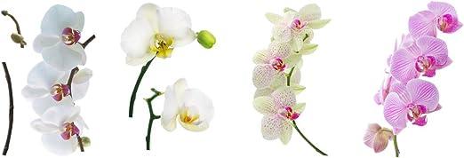 8 x para ventanas de la orquídea, diseño de orquídeas, de la flor ...