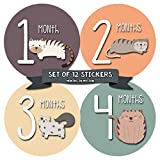 Monthly Baby Stickers by Months In Motion | 12 Month Milestone Sticker for Newborn Babies Cats Kitten (Style 1174)