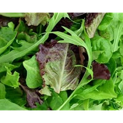 700 Organic Blend Seeds Gourmet Lettuce Unique Tasty Mix : Garden & Outdoor