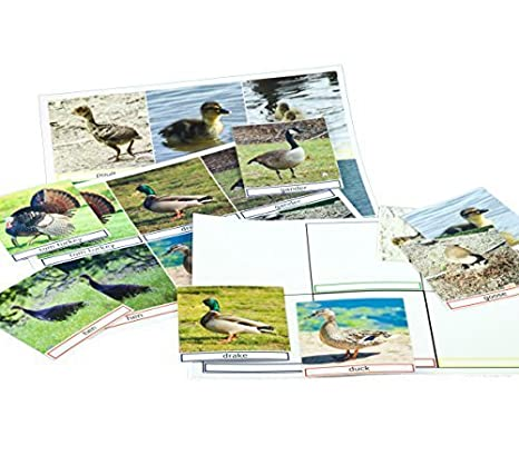 Amazon com: Keeping Busy Bird Families Match The Photos