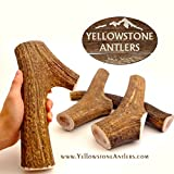 Cheap Yellowstone Antlers Grade-A+ Made in USA, XL Extra-Large Size 8.5-10.5 inches Long / 12-14 Ounces, X-Large Elk Antler Dog Chews, Dog Bones, Elk Bones Organic Dog Chews Large, X- Large Dogs
