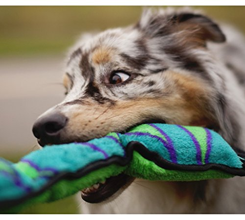 Outward Hound Stuffingless Snake Toss and Tug Plush Dog Toy with Invincible Squeakers