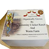 100 Count Live Superworms Organically Grown By Gimminy Crickets and Worms, My Pet Supplies