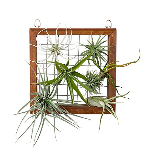 Mkono Air Plant Frame Tillandsia Wall Display, 7 7/8 Inch by Mkono
