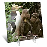 3dRose dc_74168_1 Yellow-Eyed Penguin, New Zealand-Au02 Ksc0015-Kevin Schafer-Desk Clock, 6 by 6-Inch Review