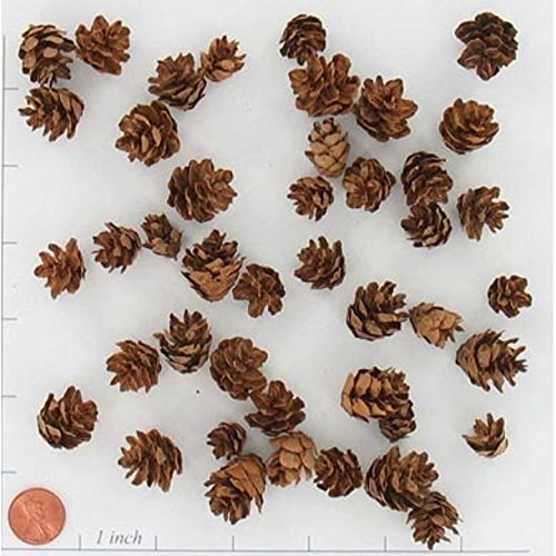 Western Hemlock Miniature Decorative Pine Cones 8oz Bag Fall Winter Holiday Home Decor Vase Bowl Filler Displays Crafting